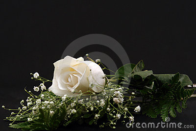Closeup of a White Rose