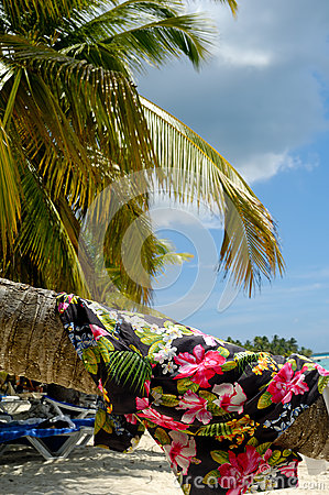 Clothing drying on palm