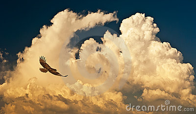 Clouds and hawk