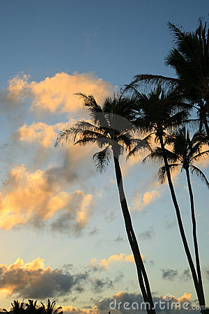 Clouds and Palm Trees at Sunset