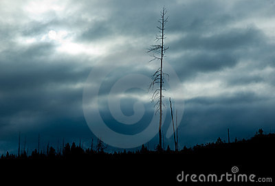Cloudscape over forest