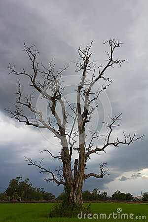 Cloudy with a dead tree.