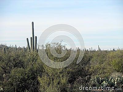 Cloudy Desert View