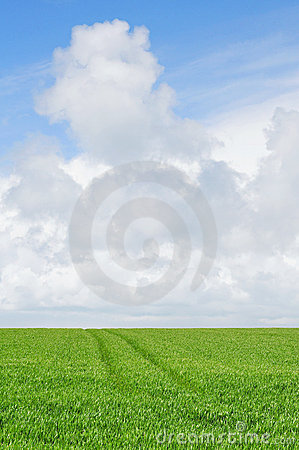Cloudy sky over farmland