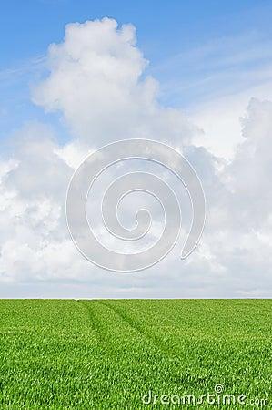 Cloudy sky over farmland