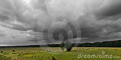 Cloudy sky over grazing cows