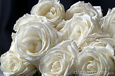 Clouse-up of white roses and pink mottled