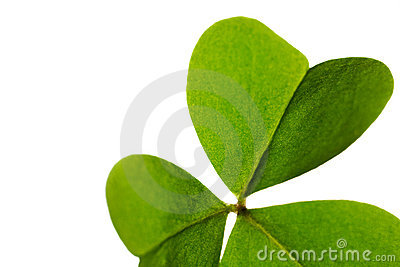 Clover leaf isolated.