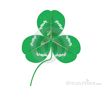 Clover leaves with waterdrop (vector)