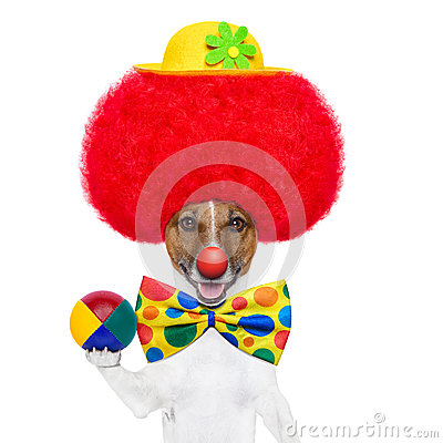 Clown dog with red wig and hat