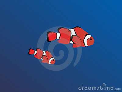 Clown Fishes Royalty Free Stock Image - Image: 11429946