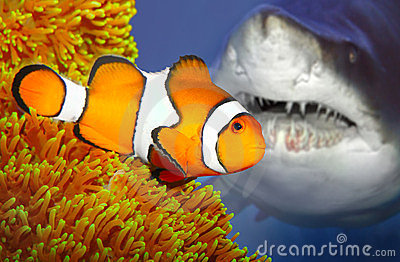 The clownfish and attacking shark.