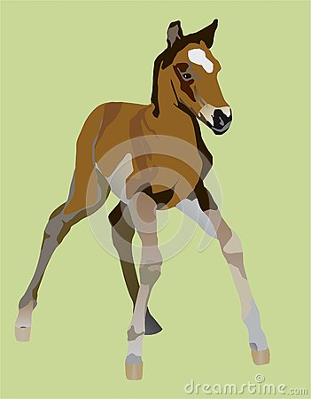 Clumsy little a foal