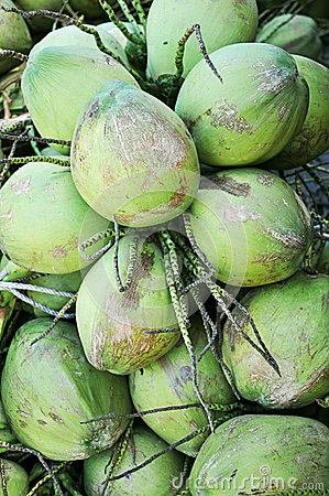 Cluster of green coconuts