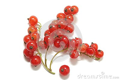 Clusters of red currant isolated on white
