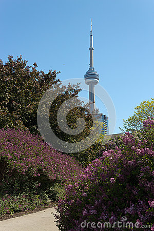 CN Tower seen from the Music Garden.