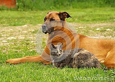 Cão com gato