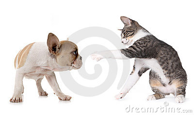 Cão de filhote de cachorro bonito e gatinho no branco