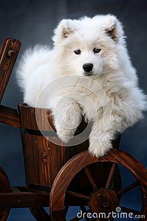 Cão do bebê