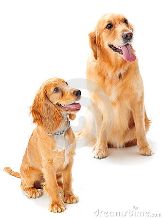 Cão e filhote de cachorro