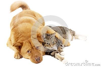 Cão e gato que relaxam