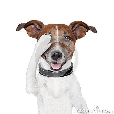 Cão escondendo do olho da coberta