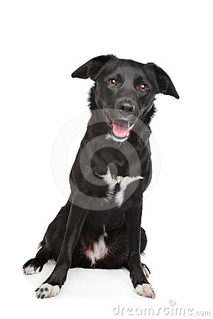 Cão misturado da raça