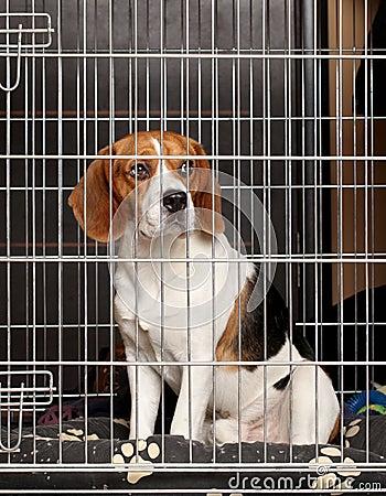 Cão na gaiola