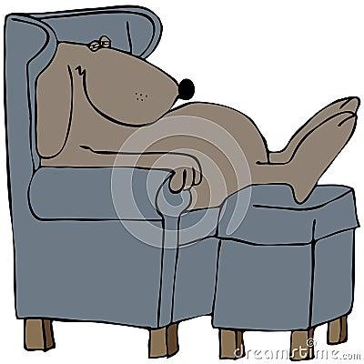 Cão que napping em uma cadeira