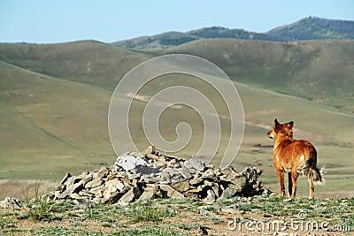 Cão que olha fixamente no vale