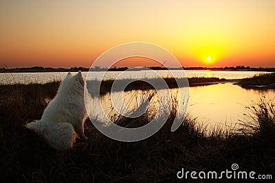 Cão que olha no nascer do sol