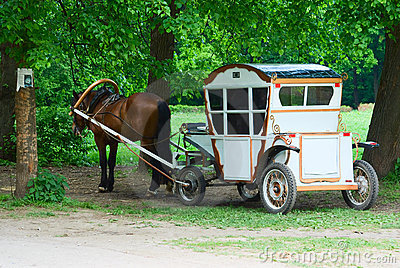 Coach with chestnut horse