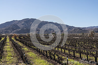 Coachella Valley, California vineyard