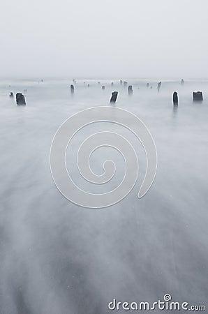 Coast Beach Waves and Stumps