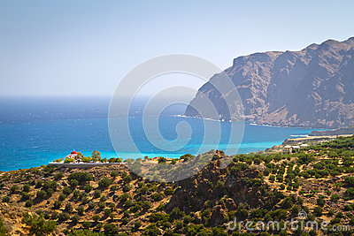 Coast of Crete with olive trees