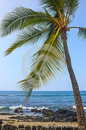Coast of Kailua-Kona with Palm