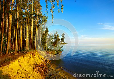 Coast and sunset trees