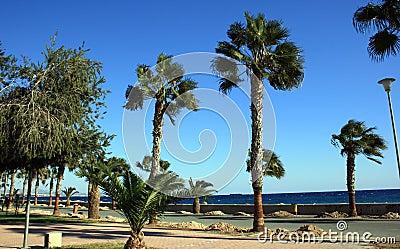 Coastal Cyprus