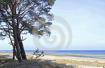 Coastal Forest on the Baltic Sea