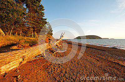 Coastal Log At Sunset Royalty Free Stock Images - Image: 26028979