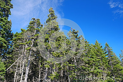 Early morning light along cutler coast furthermore Fishing moreover Stock Images Coastal Maine Pine Trees Growing Seaside Grove Summer Day Image40552294 additionally Royalty Free Stock Photo Australia Map Image273635 besides RefPrint php. on 2