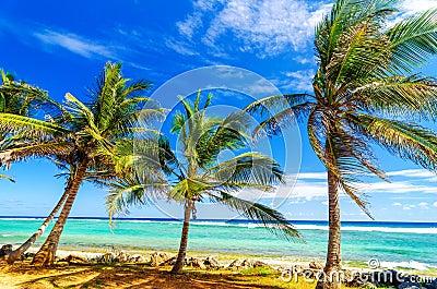 Coastal Palm Trees