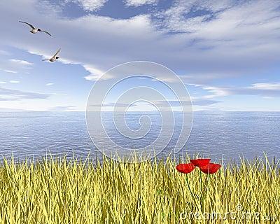 Coastal Poppy Field