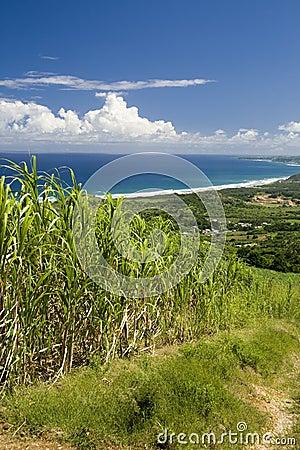 Coastal Scene Barbados