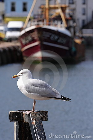 Coastal Seagull with water and fishing boat