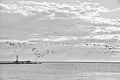 Coastline with birds.