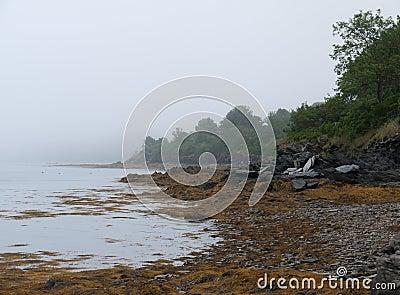 Coastline at Low Tide