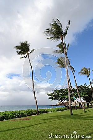 Coastline of Maui