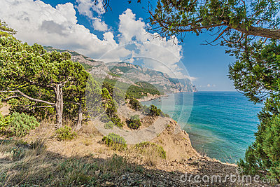 Coastline with pine trees