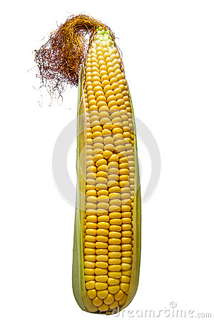 Cob isolated